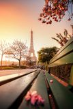 Eiffel Tower during spring time in Paris, France Royalty Free Stock Image