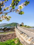 The Eilean Donan Castle with spring tree in Highlands of Scotland. Famous Eilean Donan Castle with spring tree in Highlands of Scotland Royalty Free Stock Photo