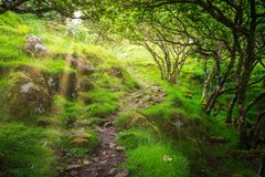 The famous Fairy Glen, located in the hills above the village of Uig on the Isle of Skye in Scotland. Stock Images