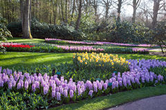 Famous flowers park Keukenhof in Netherlands Stock Photo