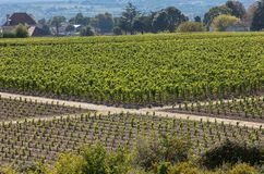 Famous French Vineyards at Saint Emilion town near Bordeaux, France. royalty free stock image