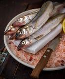 Famous fresh Baltic fish smelt or korjushka Stock Photo