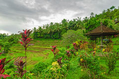 Famous galleries terraces of Bali during the rainy season. Royalty Free Stock Photo