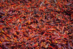 Famous gondal red chillies. Indian red chiilies in the marked Stock Image