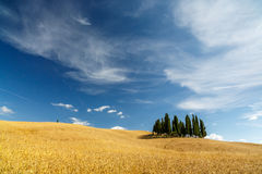 Famous group of cypresses, Tuscany, Italy Royalty Free Stock Photo