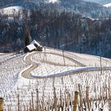 Famous Heart shaped wine road in Slovenia in winter, royalty free stock photos