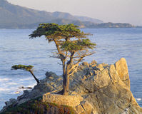 Famous lone cypress Royalty Free Stock Photography