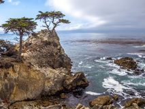 Famous Lone Cypress Royalty Free Stock Photo