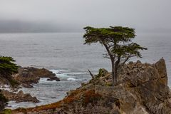 Lone Cypress Tree. The famous lone cypress tree of Monterey, California on the central coast royalty free stock images