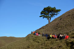 The Famous Lone Tree of Mt. Pulag, Benguet Province, Philippines. Mountain climbers descending Mt. Pulag in the Ambangueg trail. The tree adds beauty on the Royalty Free Stock Photography