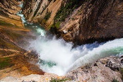 The famous Lower Falls in Yellowstone National Park. The Lower Falls on the Yellowstone River ( Yellowstone National Park, Wyoming Royalty Free Stock Photography