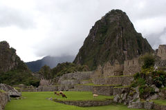 The Famous Machu Picchu Royalty Free Stock Images