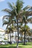 Ocean Drive Palms Royalty Free Stock Photo