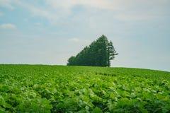 The famous Mild Seven no Oka. At Hokkaido, Japan stock photo