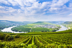 Famous Moselle Sinuosity. In Trittenheim, germany Royalty Free Stock Photo