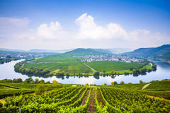 Famous Moselle Sinuosity with vineyards near Trittenheim. Famous Moselle Sinuosity in Trittenheim, Germany Royalty Free Stock Photos