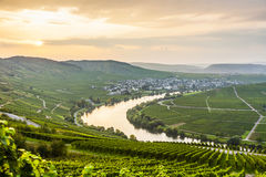 Famous Moselle Sinuosity with vineyards Royalty Free Stock Photo