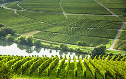 Famous Moselle Sinuosity with vineyards Royalty Free Stock Image