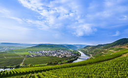 Famous Moselle Sinuosity with vineyards. Famous Moselle Sinuosity in Trittenheim, germany Royalty Free Stock Photography