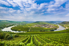 Famous Moselle Sinuosity with vineyards. Famous Moselle Sinuosity in Trittenheim, Germany Royalty Free Stock Photos