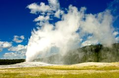 Old Faithful, Yellowstone National Park. The Famous Old Faithful Geyser in Yellowstone National Park royalty free stock images