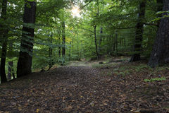 The famous Palatinate Forest in Germany Stock Photo