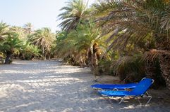 Famous palm beach of Vai, island of Crete, Greece Stock Images