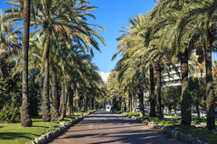 Famous palm grove in south of France Royalty Free Stock Image
