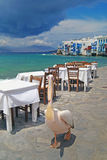 The famous pelecan walking by the sea on Mykonos island Royalty Free Stock Images