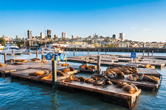 Famous pier 39 at the Fisherman's Wharf in San Francisco. USA Royalty Free Stock Photography