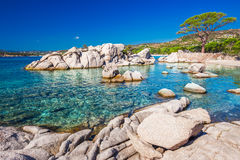 Famous pine tree on Palombaggia beach with azure clear water and royalty free stock photos