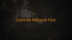 Famous Rain Forest typography series -  Daintree National Park.  stock footage