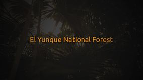Famous Rain Forest typography series -   El Yunque National Forest.  stock video