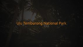 Famous Rain Forest typography series - Ulu Temburong National Park.  stock video footage
