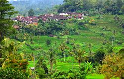 Famous rice paddy and small village near Jatliluwih in Bali Royalty Free Stock Photography