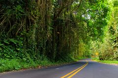 Famous Road to Hana fraught with narrow one-lane bridges, hairpin turns and incredible island views, curvy coastal road with views. Of cliffs, beaches Royalty Free Stock Image