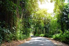 Famous Road to Hana fraught with narrow one-lane bridges, hairpin turns and incredible island views, curvy coastal road with views. Of cliffs, beaches Stock Photos