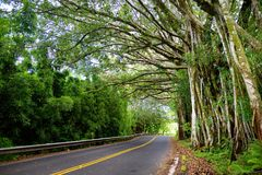 Famous Road to Hana fraught with narrow one-lane bridges, hairpin turns and incredible island views, curvy coastal road with views. Of cliffs, beaches Stock Photo