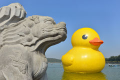 The famous rubber duck is exhibited at the Summer Palace Royalty Free Stock Photo