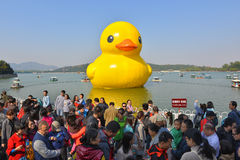 The famous rubber duck is exhibited at the Summer Palace Stock Photography