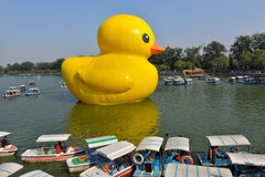 The famous rubber duck is exhibited at the Summer Palace Royalty Free Stock Images
