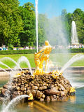 Famous Samson and Lion fountain in Peterhof Stock Image