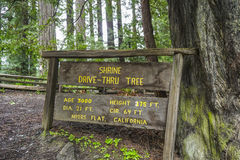 The famous Shrine Drive-through tree at Redwoods National Park - ARCATA - CALIFORNIA - APRIL 17, 2017 Stock Images
