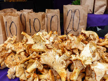 Famous Sunday Hollywood Farmers Market Chanterelle Mushroom Stand. Famous Sunday Hollywood Farmers Market vegetable stand selling beautiful Chanterelle mushrooms Royalty Free Stock Photo