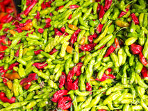 Famous Sunday Hollywood Farmers Market Chili Stand. Famous Sunday Hollywood Farmers Market vegetable stand selling beautiful green & red chilies direct from Royalty Free Stock Photos