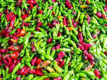 Famous Sunday Hollywood Farmers Market Chili Stand. Famous Sunday Hollywood Farmers Market vegetable stand selling beautiful green & red chilies direct from Stock Image