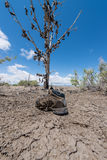 The famous tamarisk shoe tree near Amboy on Route 66 Stock Image