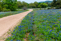Famous Texas Bluebonnet (Lupinus texensis) Wildflowers. Beautiful Dirt Road and Roadside Covered with the Famous Texas Bluebonnet (Lupinus texensis) Wildflowers royalty free stock photography