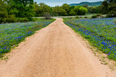Famous Texas Bluebonnet (Lupinus texensis) Wildflowers. Country Dirt Road and Beautiful Roadside Covered with the Famous Texas Bluebonnet (Lupinus texensis) stock photo