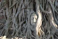 The famous tourist attraction spot of the Ancient Buddha head  c Stock Photography